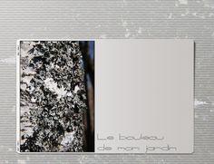 bouleau-texture