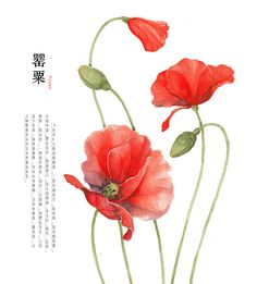 water colour flower on Illustration Served