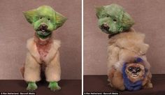Juxtapoz Magazine - Best of 2013: When Dog Grooming Goes Too Far