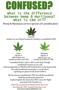 What is the difference between hemp and marijuana? What is CBD Oil? Was ist der Unterschied zwischen Hanf und Marihuana? Was ist CBD-Öl? Endocannabinoid System, Cannabis Plant, Cbd Hemp Oil, Oil Benefits, Plants, Vitamins, Herbs, Medical Marijuana, Weed Humor