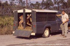 The Case of the Vanishing Wisconsin Deer Genetics #DeerHunting