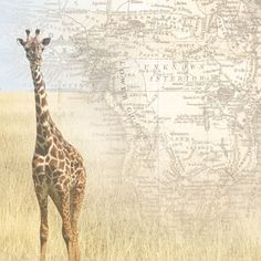 Africa Map and Giraffe 12x12 Scrapbooking Paper