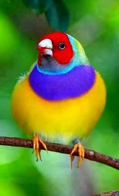 #PRETTY #COLORFUL #BIRD