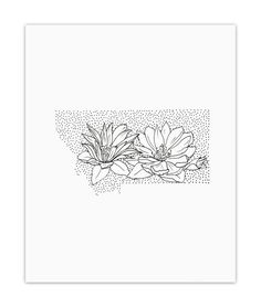 Montana Bitterroot State Flower Drawing Giclee Print by annatovar