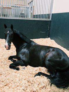 """gucci-equestrian: """"naptime """""""