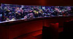 amazing interior design aquarium