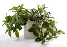 1000 Images About Easy Care Interior Plants On Pinterest