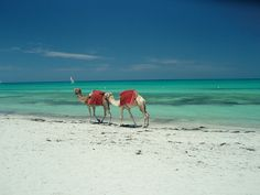 Djerba - An Island of Palm Trees, Olive Trees and Fruit