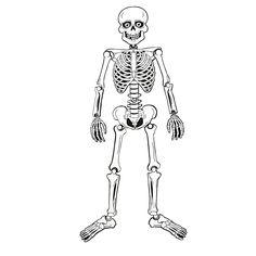 Skeleton Magnet Set - OrientalTrading.com