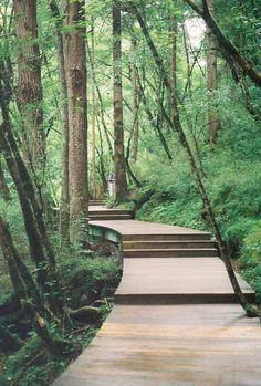 A shot of the path in JiuZhaiGou.