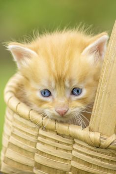Photo sweet cat by Paulo Mendonça on 500px