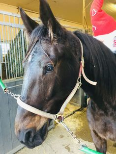 Varmblods trav hoppe   FINN.no Horses, Animals, Creative, Animales, Animaux, Animais, Horse, Words, Animal