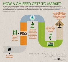 How A GM Seed Gets to Market - The Farmer's Daughter USA