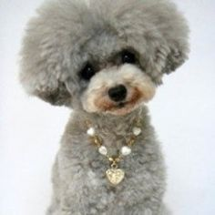 Now your pet can step out in style in this fabulous pet jewelry! You'll find great pet necklaces, collars and more here, in a variety of colors...
