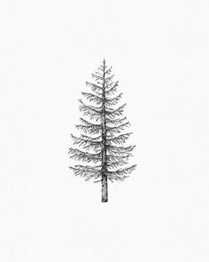 33 best drawing pine