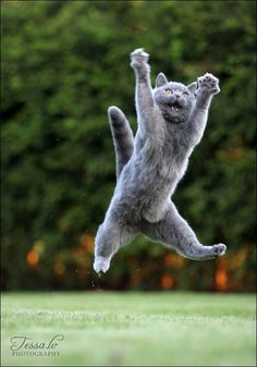 Pudgykitties: Weeeeeee!!!! - Click for More...