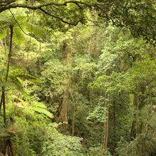 Fotobehang - Bunya Mountains National Park