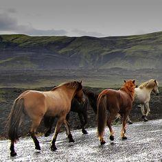 valscrapbook:    In the rain by Sverrir Thorolfsson on Flickr.