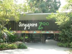 Singapore Zoo.....the kids had a blast!