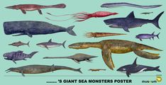 Giant Sea Monsters Poster - Decorate your room with these posters created by Joris Snaet for 🐋😍 Sea Monsters, Decorate Your Room, Whale, Museum, Photo And Video, Lion, Posters, Animals, Leo