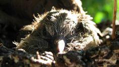 Jovem no ninho | Fotografia de bawrery | Olhares.com