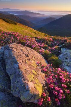 Carpathian Mountains, Ukraine Oleksandr Kotenko