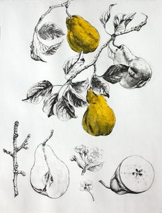 Pears.Etching and Chine Colle