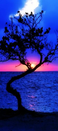 Beautiful Sunset in a Stunning Blue Backdrop...