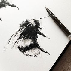 Another evening drawing insects for summer school. I've no idea where I'm going with the brief but love drawing these little beauties. Bee Design, Love Drawings, Summer School, Surface Pattern Design, Insects, Creatures, Photo And Video, Illustration, Garden Tips