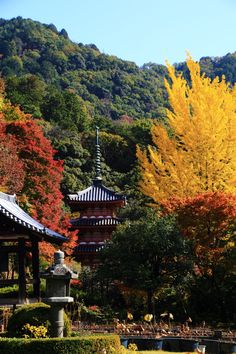 Kyoto Uji Mimuroto-ji Temple autumn leaves and ginkgo