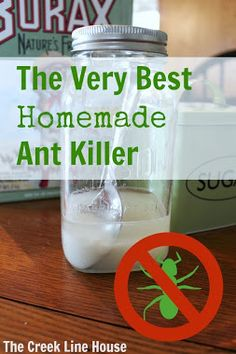 The Creek Line House: The Very Best Homemade DIY Ant Killer