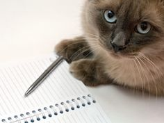 Pet Adoption Checklist: Prepare your home prior to your new adopted dog or adopted cat's arrival