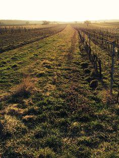 Spring in Burgenland Vineyard, Outdoor, Nice Asses, Outdoors, Outdoor Games
