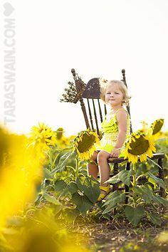 sunflower field---where oh where?!?!?