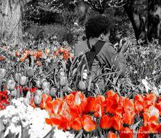 Tulips Orange, Missouri Botanical Garden Grey Pictures, Missouri Botanical Garden, Sacral Chakra, Shades Of Grey, Tulips, Bloom, Black And White, Gray, Orange