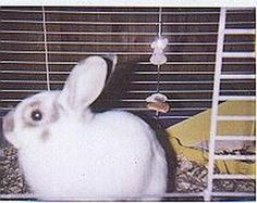 Coconut, a male Dwarf cross we cared for while he was in the rescue's care.