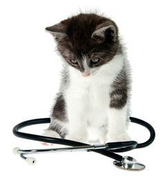 Une étude de l'Université du Minnesota a prouvée que le fait d'avoir un chat diminuait drastiquement les risques des problèmes de santé !
