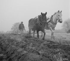 Farming, Countries, Horses, Animals, History, Pictures, Animales, Animaux, Animal