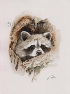 RACCOON painting by Jan Taylor. ORIGINAL watercolor painting, not a print. by KeepersCottageArt on Etsy