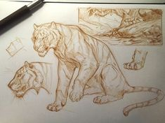 Morning sketch before work inspired by all the concept artist that worked on the Jungle Book movie and thanks everyone for the awesome birthday wishes! Animal Sketches, Animal Drawings, Drawing Sketches, Art Drawings, Big Cats Art, Cat Art, Sketchbook Inspiration, Art Sketchbook, Cat Reference
