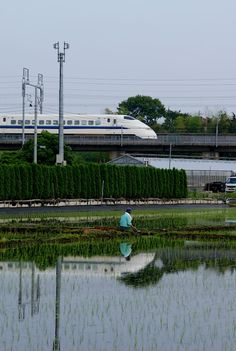 300系新幹線@用田あたり Rice field and Shinkansen 300 series.