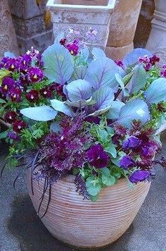 Edibles & Ornamentals - This colour themed pot has purple cabbage as the star attraction in the centre with pretty annual pansies and smaller plants as fillers and spillers. A great example of how to team edible plants with flowers. More tips on container Container Plants, Container Gardening, Container Design, Beautiful Gardens, Beautiful Flowers, Ornamental Cabbage, Fall Containers, Fall Planters, Deco Floral