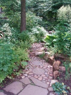 Path through shade garden Flanked by Tall Meadow Rue