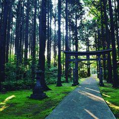 【grisaia05】さんのInstagramをピンしています。 《#日本#風景#景色#文化#神社仏閣#綺麗#自然#鳥居#道#デジタル一眼レフ#写真#森#幻想#山》