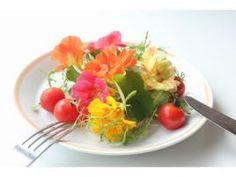 食べられる花 普通の花と違いは?