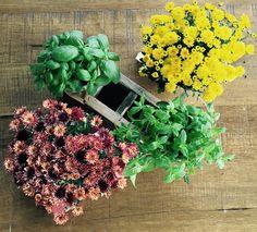 My Flower, Flowers, Flower Arrangements, Floral Wreath, Wreaths, Design, Home Decor, Floral Arrangements, Flower Crown
