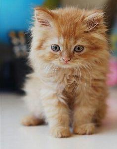 Orange kittens have got to be my favorite ♥♥