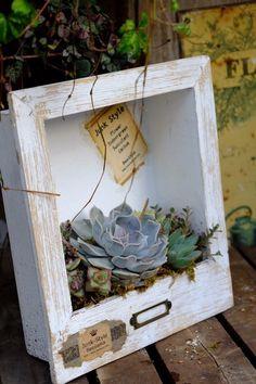 Succulent Shadow Box