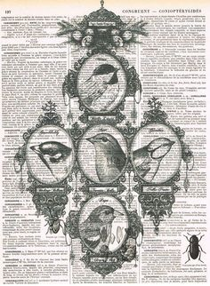 Bird.Family Tree.Collage..Antique Book