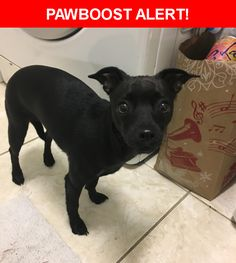 Is this your lost pet? Found in Los Angeles, CA 90026. Please spread the word so we can find the owner!    Nearest Address: Silver Lake Boulevard, Los Angeles, CA, United States